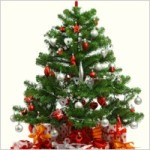 beautiful_christmas_tree_6_hd_picture_170696